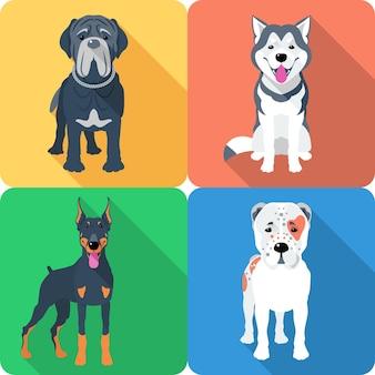 Conjunto de perros pastor de asia central, doberman, alaskan malamute y mastino icono de raza diseño plano