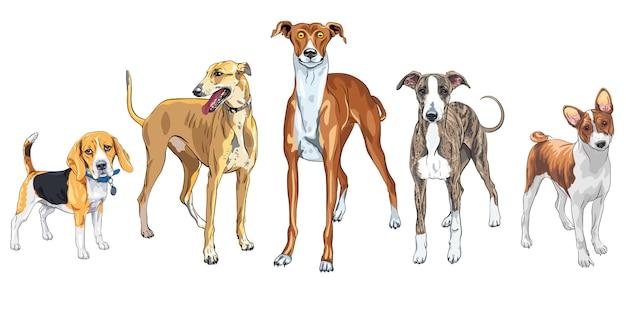 Conjunto de perros de raza diferente
