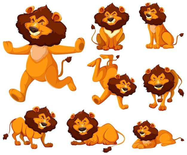 Conjunto de personaje de dibujos animados de león
