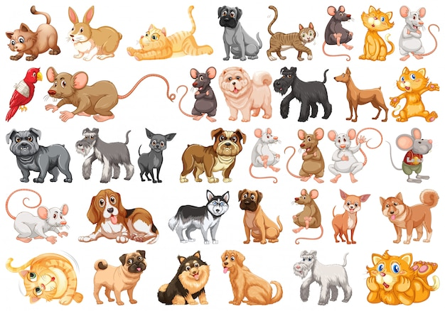 Conjunto de personaje mascota