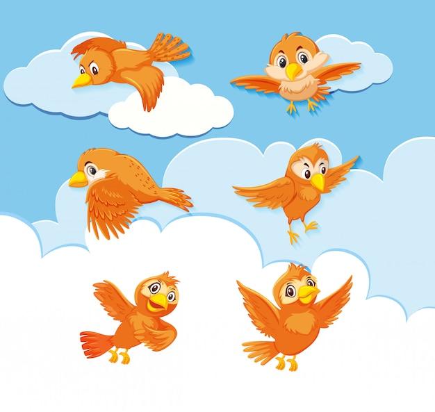 Conjunto de personaje de pájaro sobre fondo de cielo