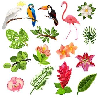 Conjunto de pictogramas de aves y plantas tropicales.
