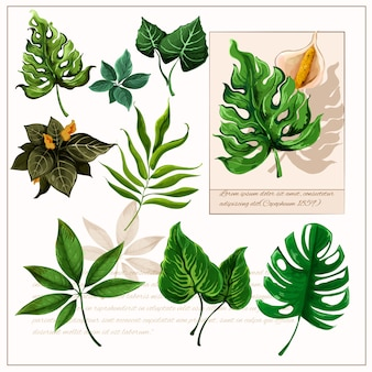 Conjunto de pictogramas de hojas tropicales verdes