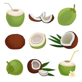Conjunto plano de cocos frescos. cóctel exótico comida natural y saludable. fruta tropical. elementos para el empaque del producto o póster