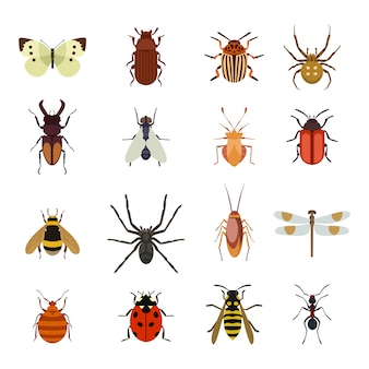 Conjunto plano de iconos de insectos
