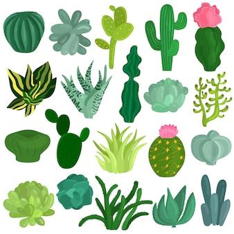 Conjunto plano de plantas de suculentas de cactus