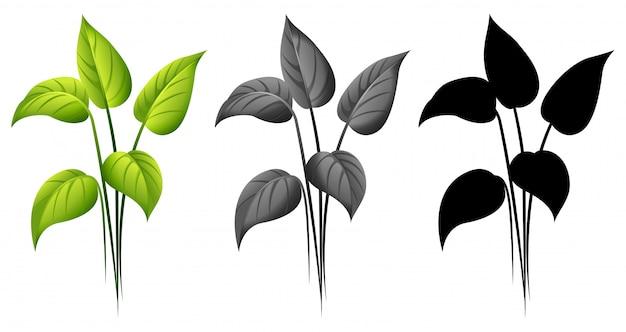 Conjunto de planta aislada