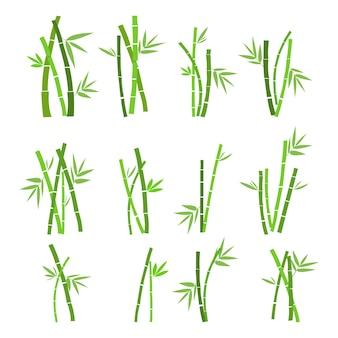 Conjunto de planta de bambú