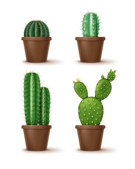 Conjunto de planta de interior de cactus decorativos en macetas de arcilla marrón aislado sobre fondo blanco.