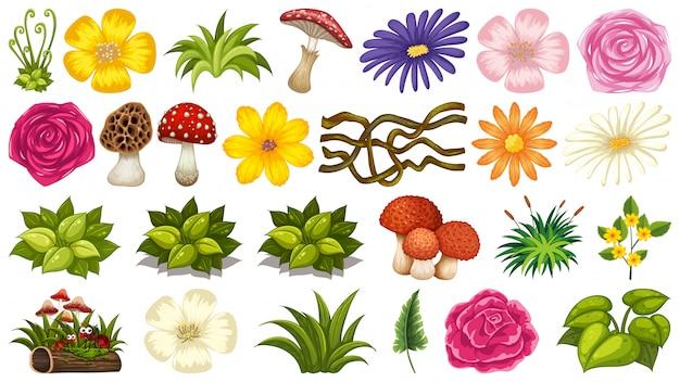 Conjunto de planta ornamental.