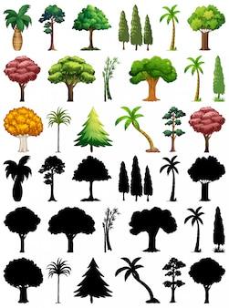 Conjunto de plantas y árboles con su silueta.