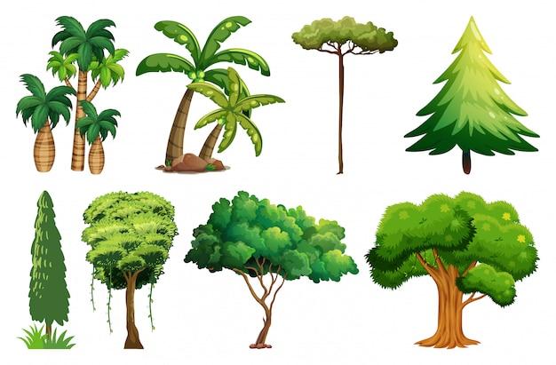 Conjunto de plantas y arboles variados