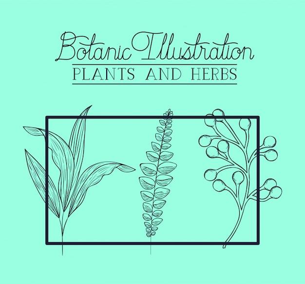 Conjunto de plantas botánicas dibujadas.