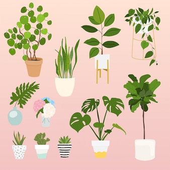 Conjunto de plantas decorativas. objetos de maceta, colección de maceta de plantas de interior.