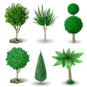 Conjunto de plantas decorativas.