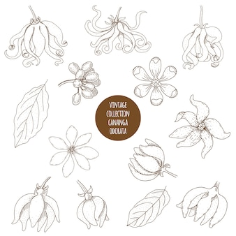 Conjunto de plantas dibujadas a mano