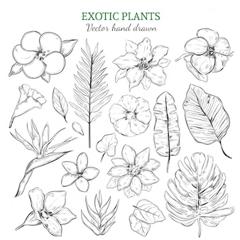 Conjunto de plantas exóticas dibujadas a mano