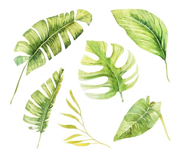 Conjunto de plantas y hojas verdes tropicales acuarelas, ilustración aislada pintada a mano