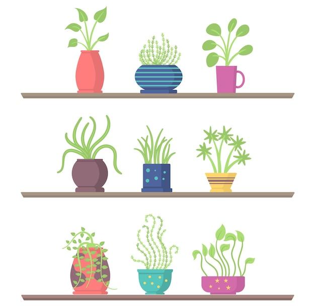 Conjunto de plantas de interior en macetas de jardín de estantes para la habitación u oficina y el interior de la casa verde