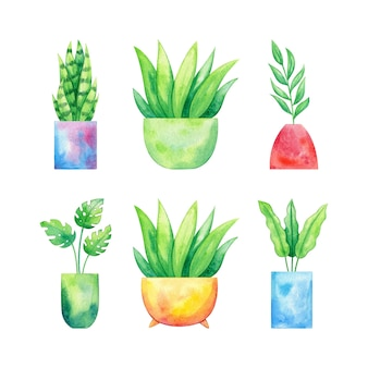 Conjunto de plantas en macetas dibujadas a mano en acuarela