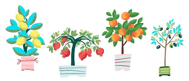 Conjunto de plantas en macetas granada olivo mandarina y limón ilustración de vector de dibujos animados