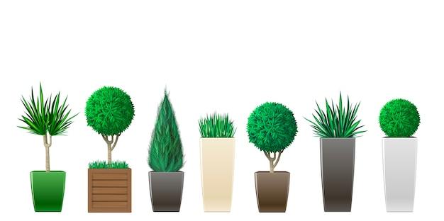 Conjunto de plantas en macetas
