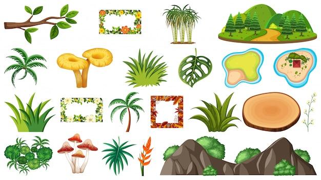 Conjunto de plantas ornamentales.