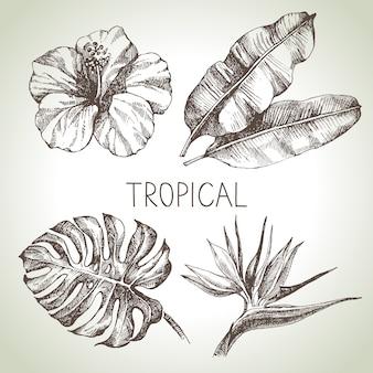 Conjunto de plantas tropicales de croquis dibujado a mano. ilustración