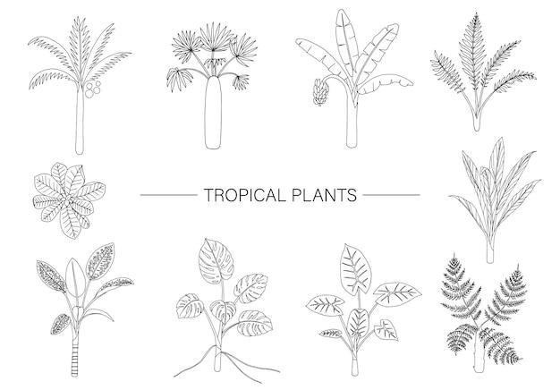 Conjunto de plantas tropicales. dibujo lineal de follaje de la selva.