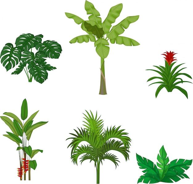 Conjunto de plantas tropicales.