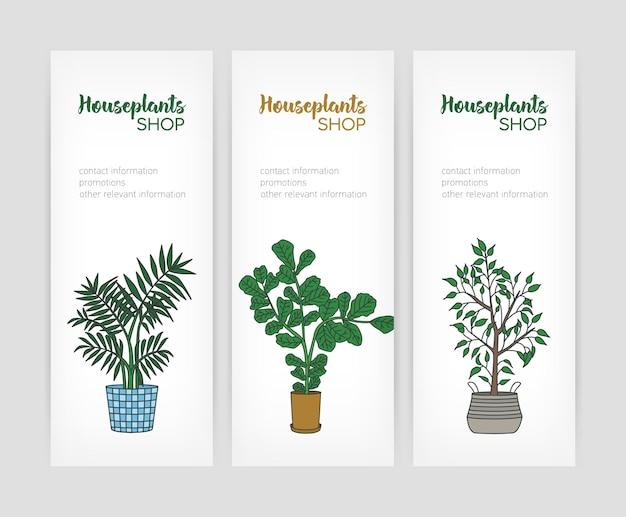 Conjunto de plantillas de banner vertical con higo de hoja de violín y higo llorón que crece en macetas y lugar para texto