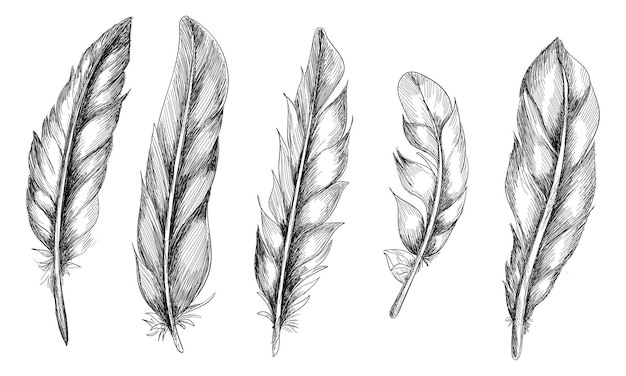 Conjunto de plumas dibujadas a mano sobre fondo blanco