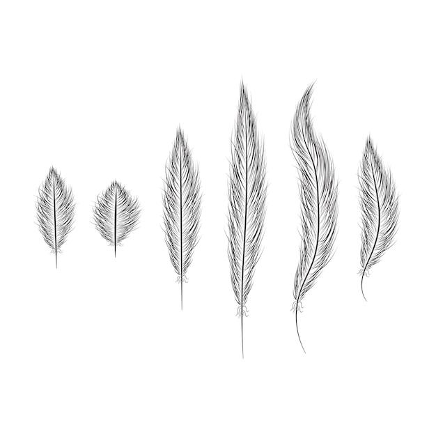Conjunto de plumas dibujadas a mano sobre un fondo blanco.