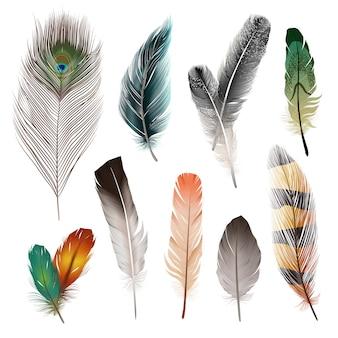 Conjunto de plumas realistas de aves.