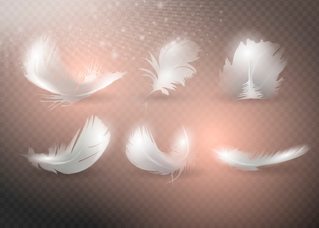Conjunto de plumas realistas.