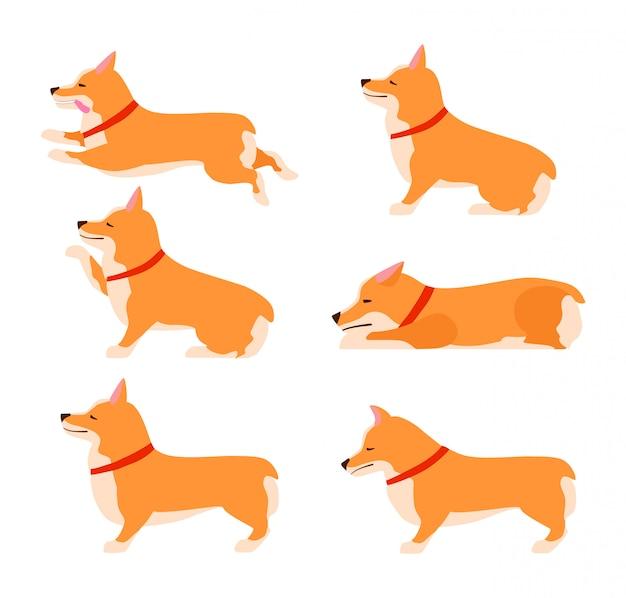 Conjunto de poses y emociones del perro. conjunto corgi galés. enseñar al perro. quedarse, esperar, sentarse