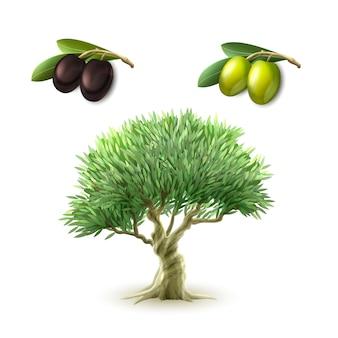 Conjunto de productos primarios de aceite de oliva.
