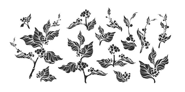 Conjunto de rama de café de forma vintage. ilustración de silueta negra aislada sobre fondo blanco
