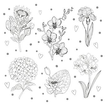 Conjunto de rama floral. contorno de flores hortenzia, orhid, iris, protea y hojas verdes.