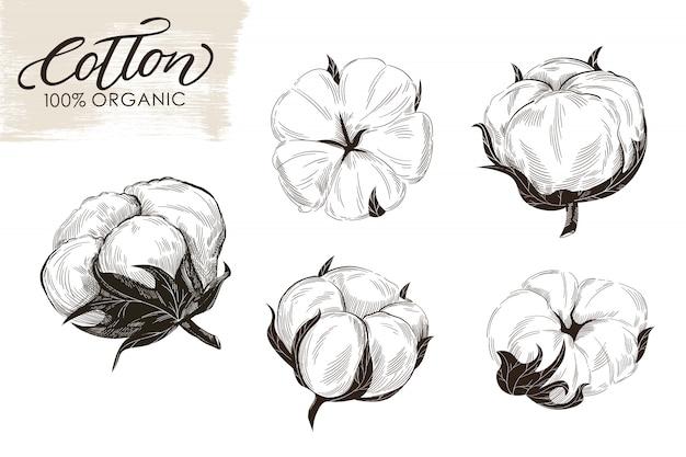 Conjunto de ramas de algodón dibujado a mano ilustración.