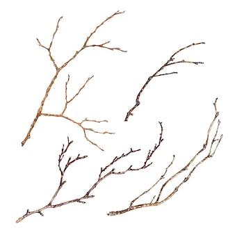Conjunto de ramas de árbol aislado sobre fondo blanco.