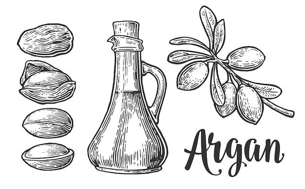 Conjunto de ramas de argán, hojas, nueces. grabado vintage