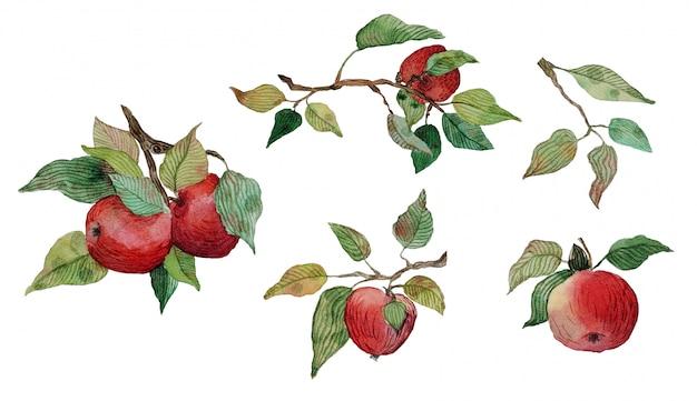 Conjunto de ramas de hojas de manzanas rojas