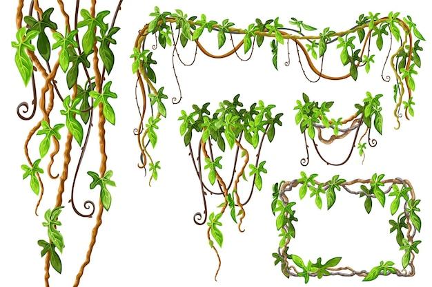 Conjunto de ramas de liana y hojas tropicales.