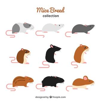 Conjunto de ratones en diseño flat