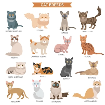 Conjunto de la raza del gato
