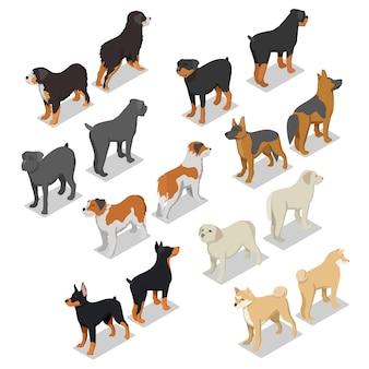 Conjunto de razas de perros isométricas
