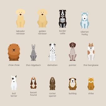 Conjunto de razas de perros, tamaño grande y mediano, vista frontal