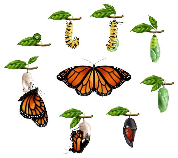 Conjunto realista de ciclo de vida de mariposa