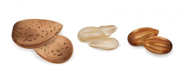 Conjunto realista de nueces almendras crudas y peladas. ilustraciones detalladas 3d